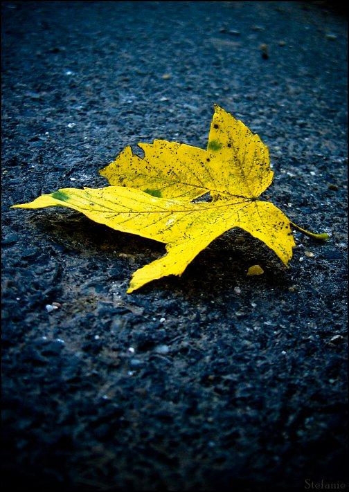 Little bit of autumn